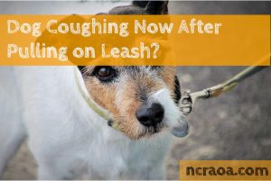 dough coughling leash