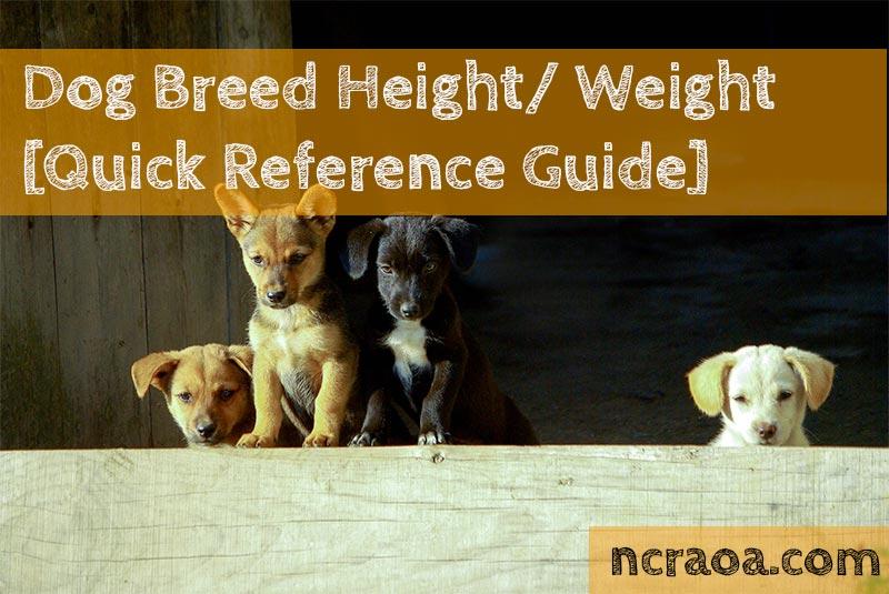 dog weight height
