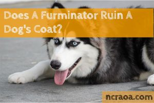 furminator ruins dogs coat