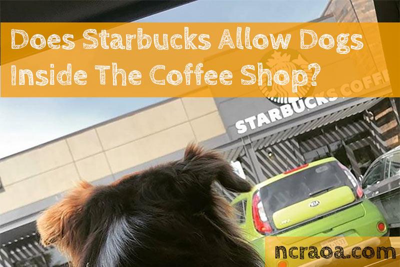 starbucks dog policy
