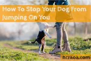 stop dog jumping