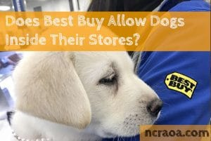best buy dogs policy