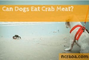 dog watching crab