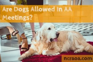 dogs aa meetings policy