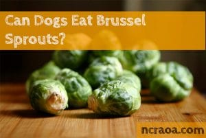 dogs eat brussel sprouts