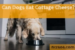 dogs eat cottage cheese