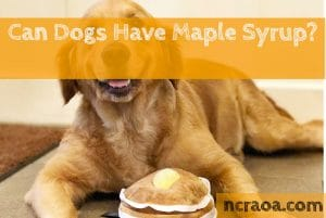 dogs have maple syrup