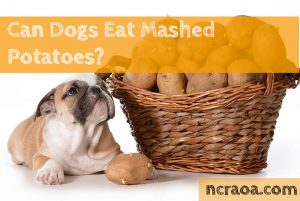 dogs eat mashed potatoes