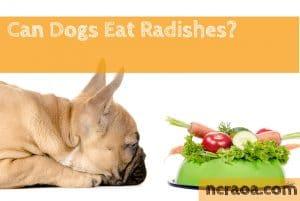 dog eat radishes