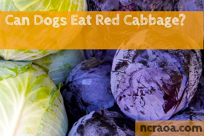 dogs eat cabbage