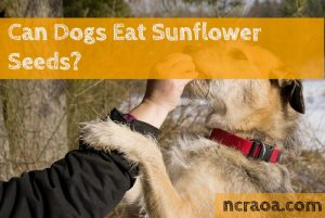 dogs eat sunflower seeds
