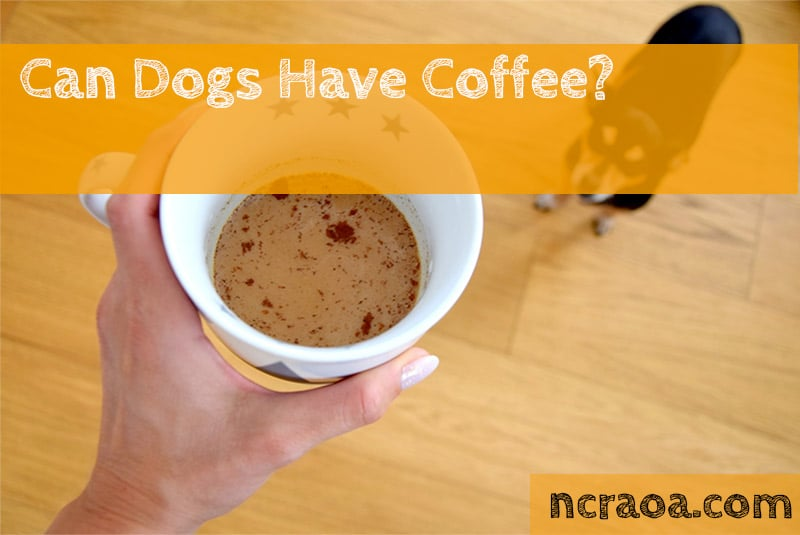 dogs have coffee