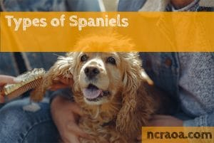 types of spaniels