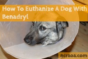 How To Euthanize A Dog With Benadryl