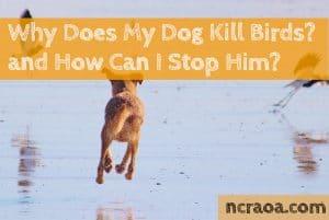 why does my dog kill birds