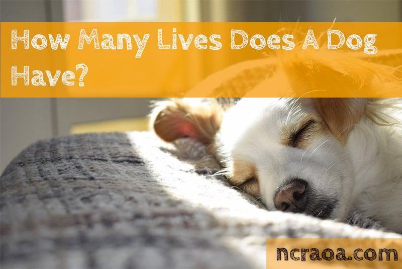 dog lives how many