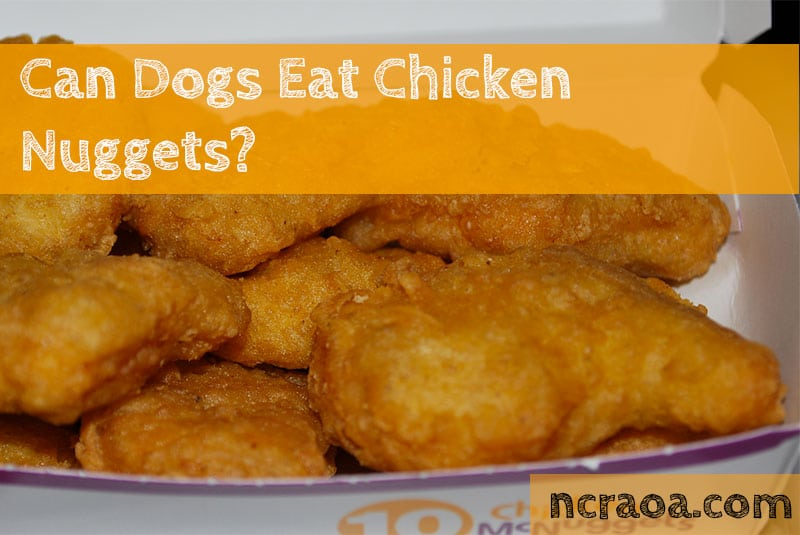 dogs eat chicken nuggets