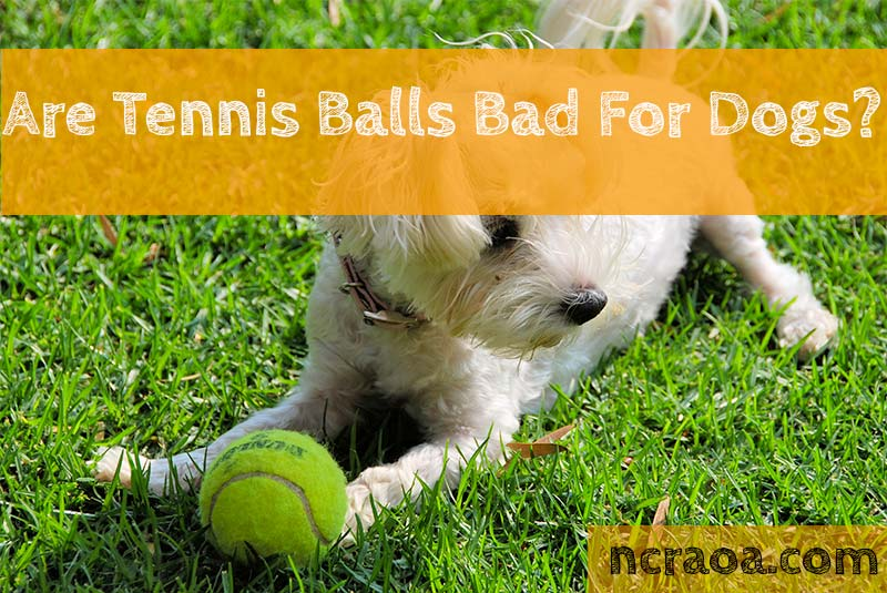 tennis balls bad for dogs