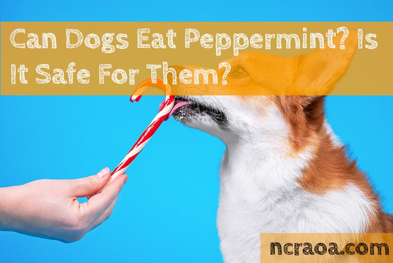 dogs eat peppermint