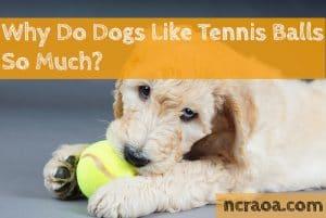 dogs love tennis balls
