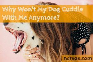 dog won't cuddle anymore