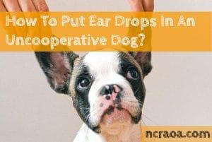ear drops dog