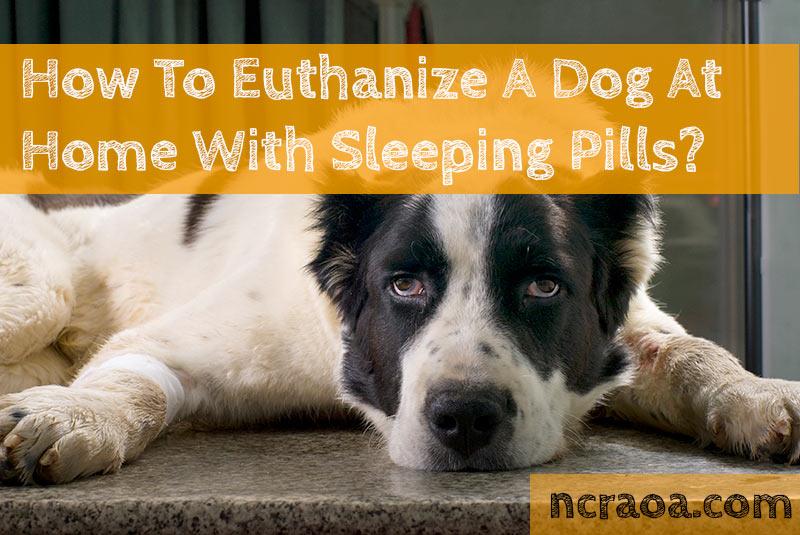 euthanize dog with sleeping pills
