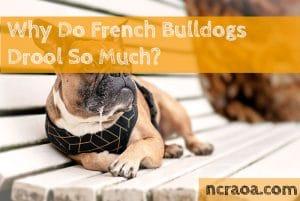 french bulldog drool