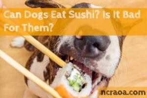 dog eat sushi