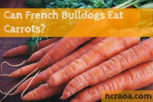 french bulldogs carrots