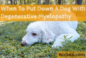Put Down a Dog with Degenerative Myelopathy
