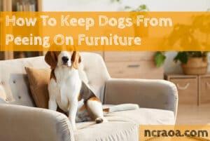 dog peeing furniture