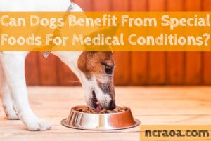 dog special foods for medical conditions