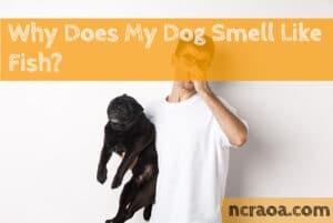 dog smells like fish