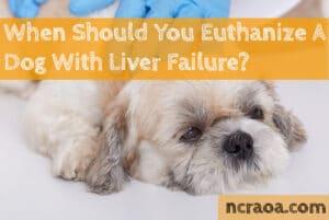 euthanize dog with liver failure