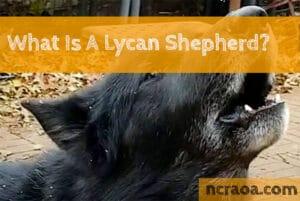 lycan shepherd