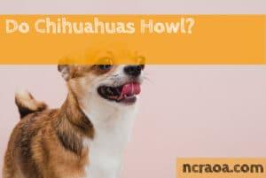 Do Chihuahuas Howl?
