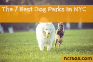 best nyc dog parks