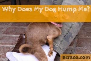 dog humping me