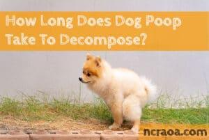 dog poop decompose timeline