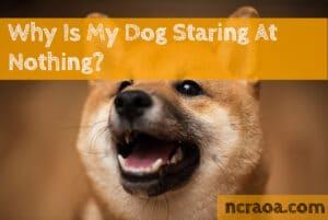 dog starting nothing