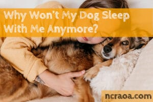 dog won't sleep with