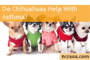 Chihuahuas Help With Asthma