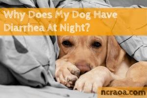 dog diarrhea at night