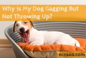 dog gagging but not throwing up