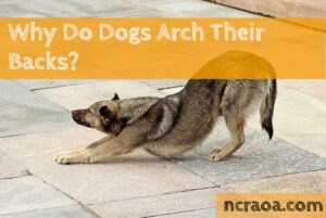 dogs arch backs