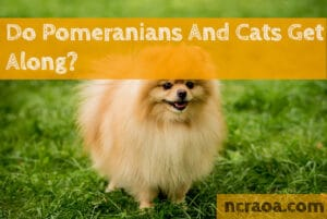 pomeranians and cats