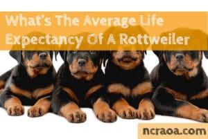Rottweiler life span