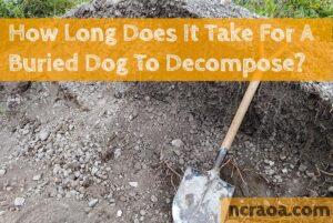 how long buried dog decompose