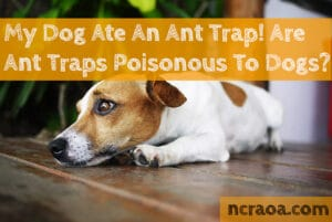 dog ate ant trap